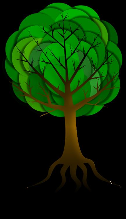 Plant Stem,Organism,Plant
