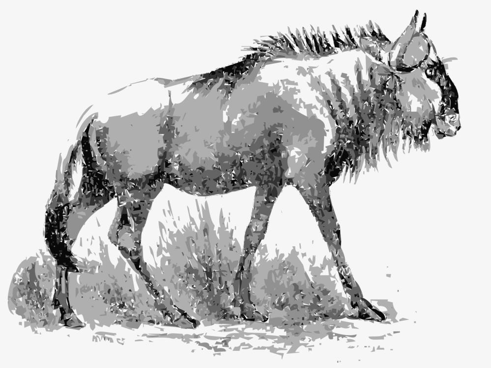 Donkey,Wildlife,Pack Animal