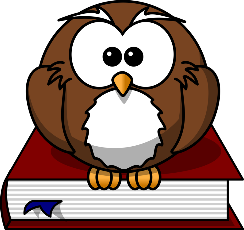 Owl,Beak,Bird