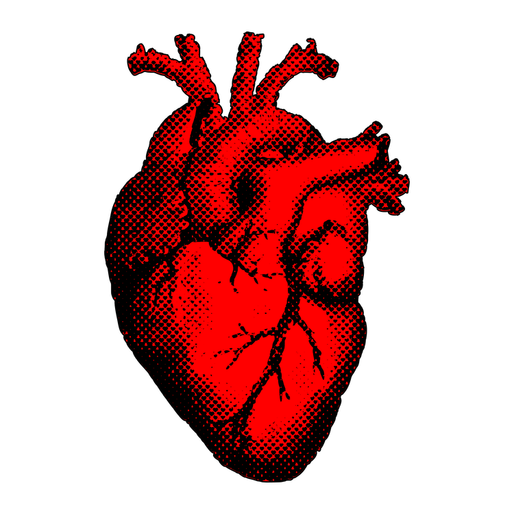 Heart Drawing Anatomy Computer Icons Organ free commercial clipart ...
