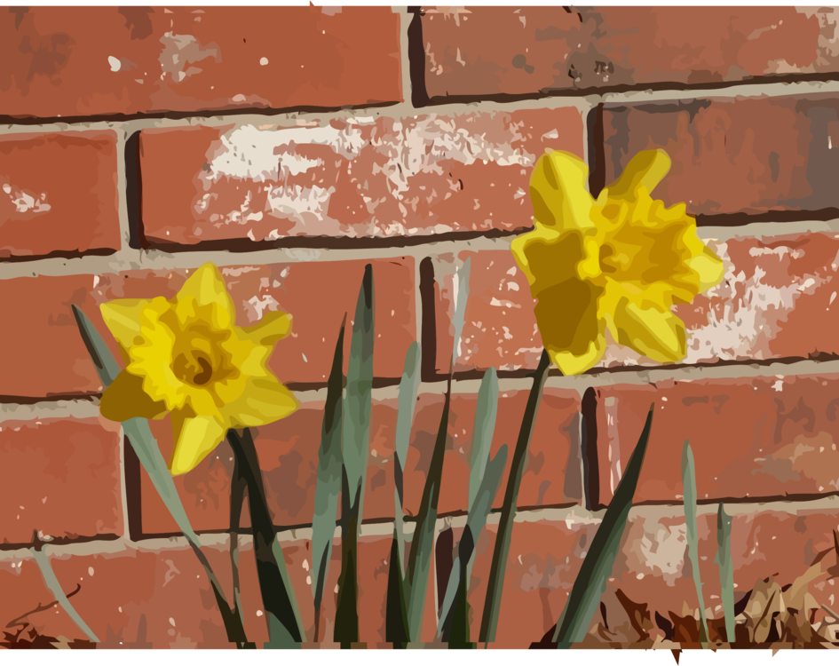 Flower,Wall,Petal