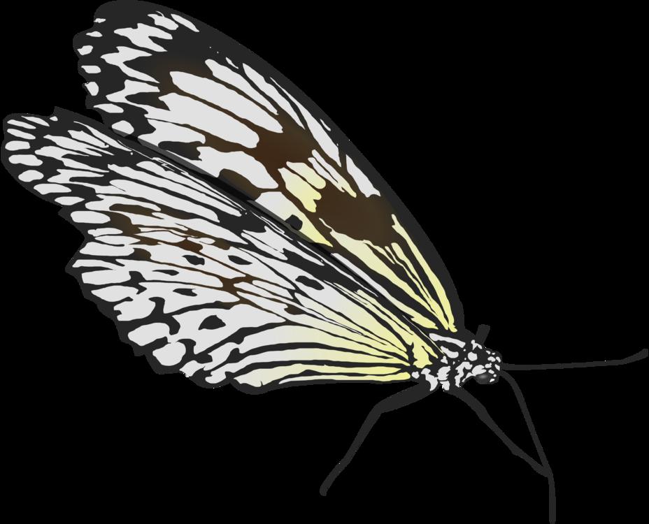 Butterfly,Leaf,Moth