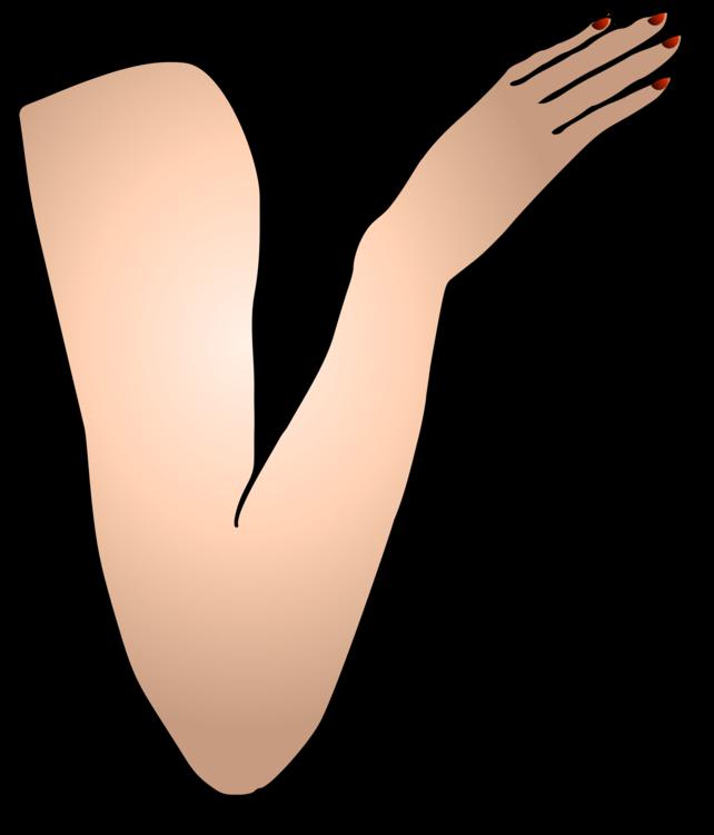 Thumb,Organ,Leg