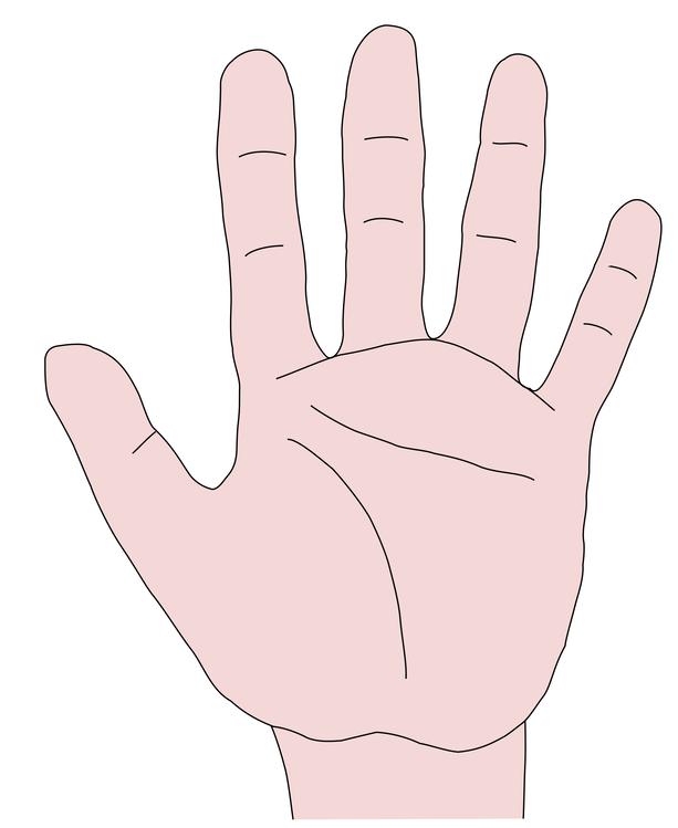 Thumb,Organ,Jaw