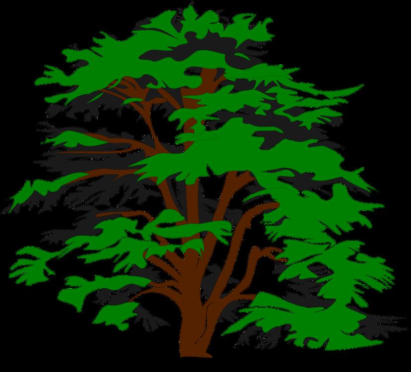 Pine Family,Plant,Flora