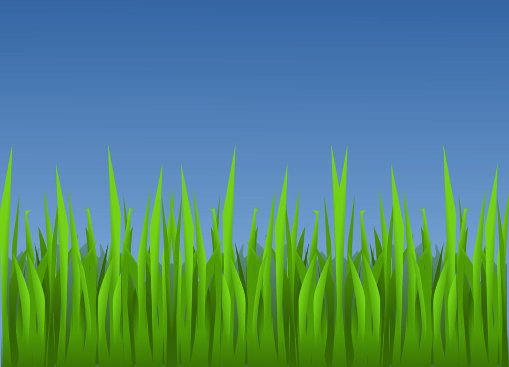 Lawn,Grass Family,Plant Stem