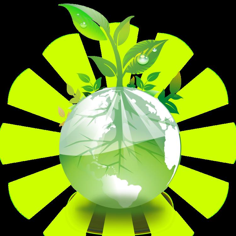 Plant,Leaf,Computer Wallpaper