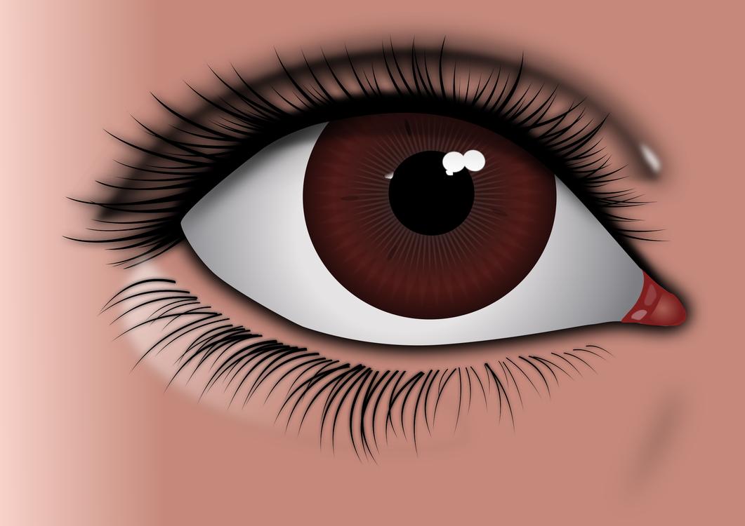 Eyelash Extensions,Close Up,Eye