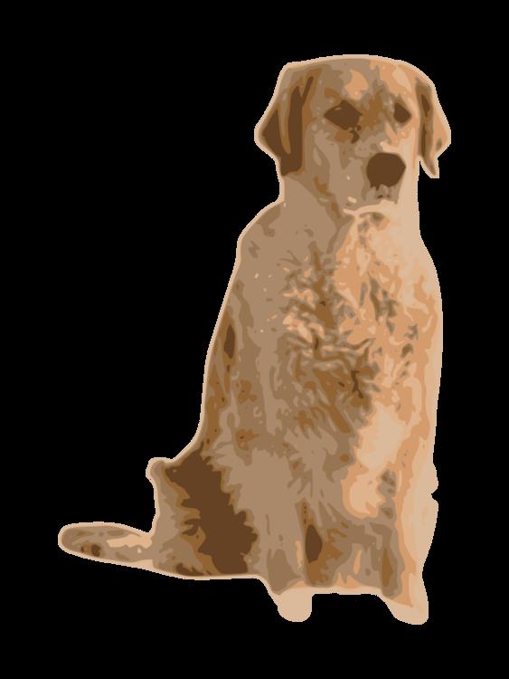Companion Dog,Carnivoran,Nova Scotia Duck Tolling Retriever
