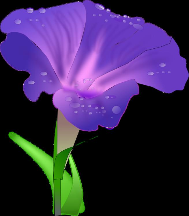 Iris Family,Plant,Flower
