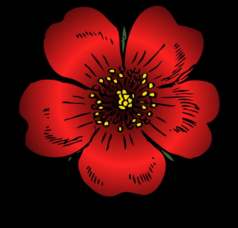 Plant,Flora,Rose Family