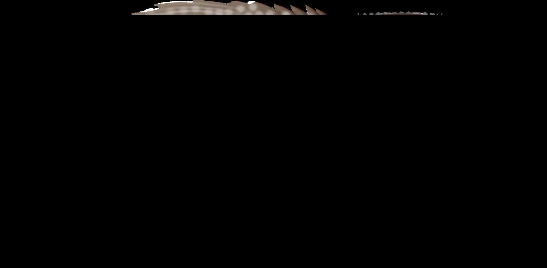 Angle,Text,Black