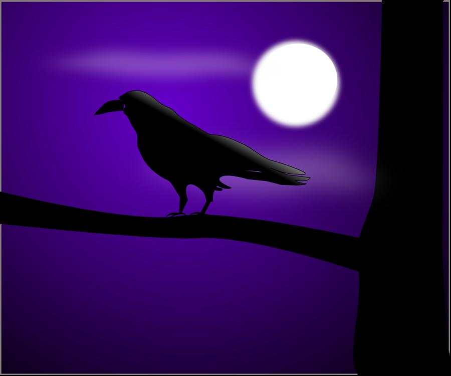 Crow Like Bird,Silhouette,American Crow