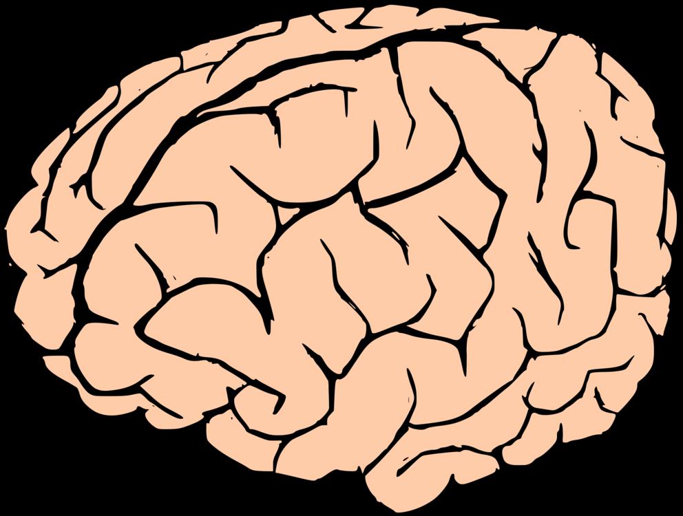 human brain neuron nervous system free commercial clipart brain