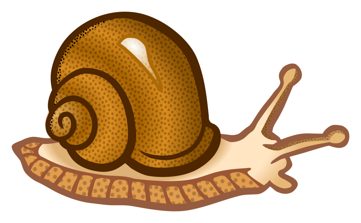Snail,Invertebrate,Snails And Slugs
