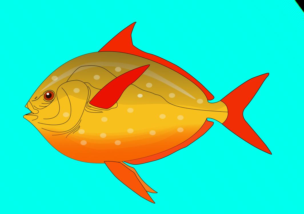 Marine Biology,Fin,Fish