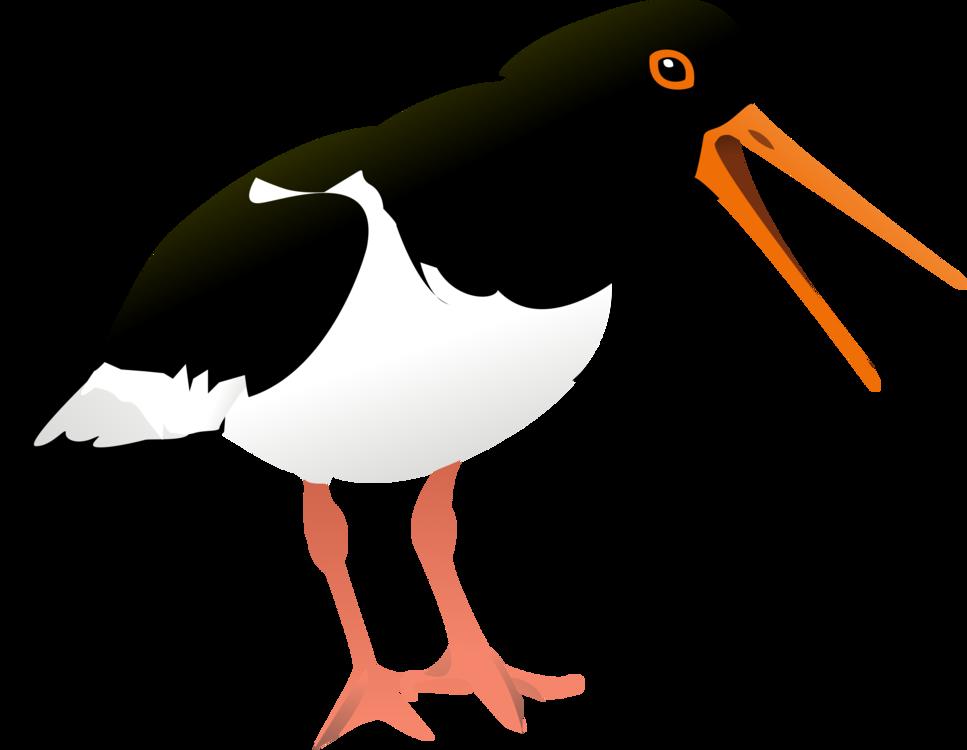 Flightless Bird,Seabird,Water Bird