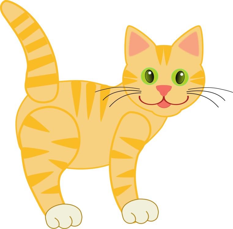 Wild Cat,Carnivoran,Kitten
