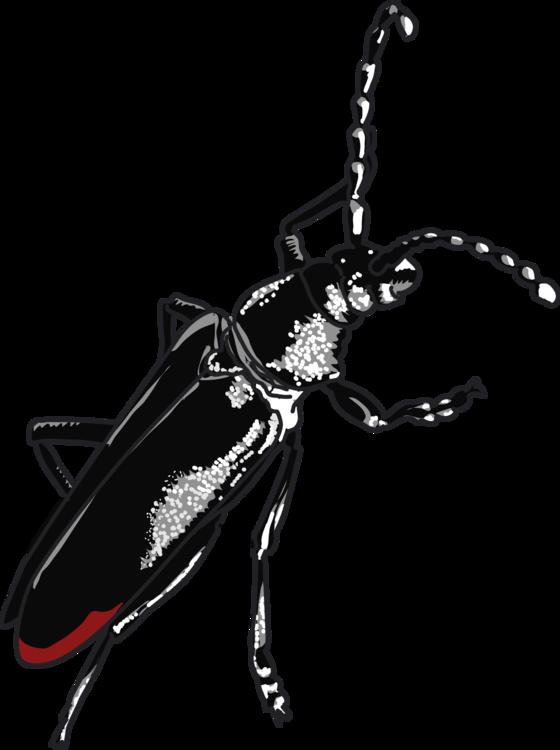 Weevil,Invertebrate,Arthropod