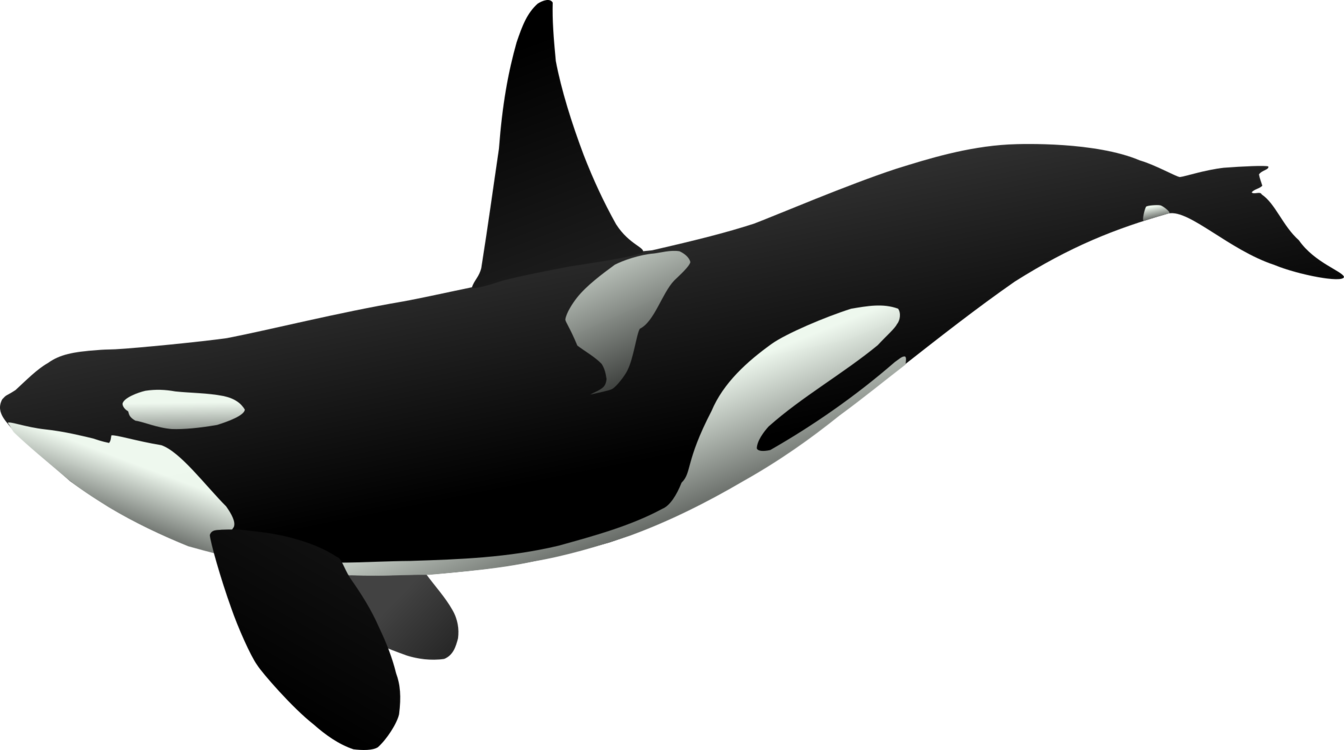 Whales Dolphins And Porpoises,Dolphin,Vertebrate