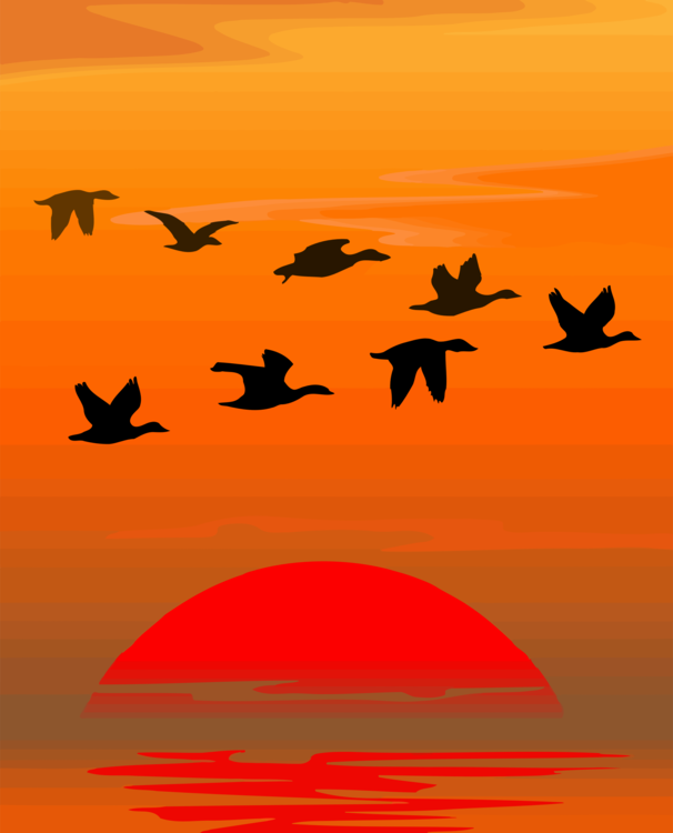 Bird Migration,Silhouette,Sky