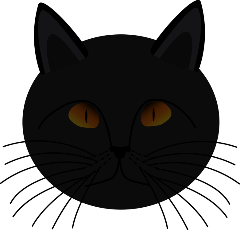 Carnivoran,Black Cat,Cat