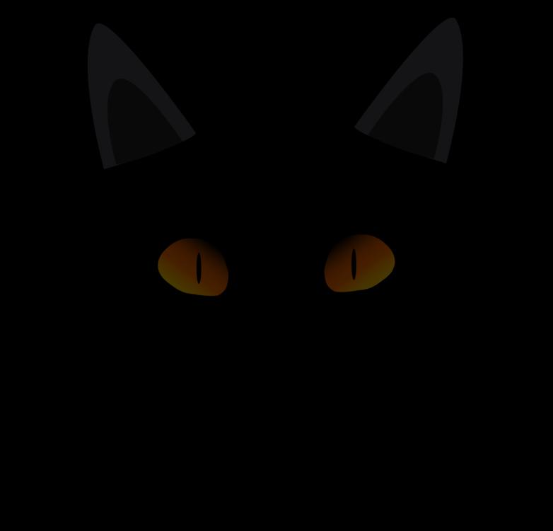 Carnivoran,Black Cat,Cat