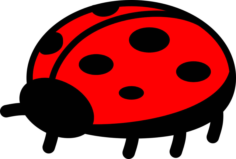 Ladybird,Beetle,Invertebrate