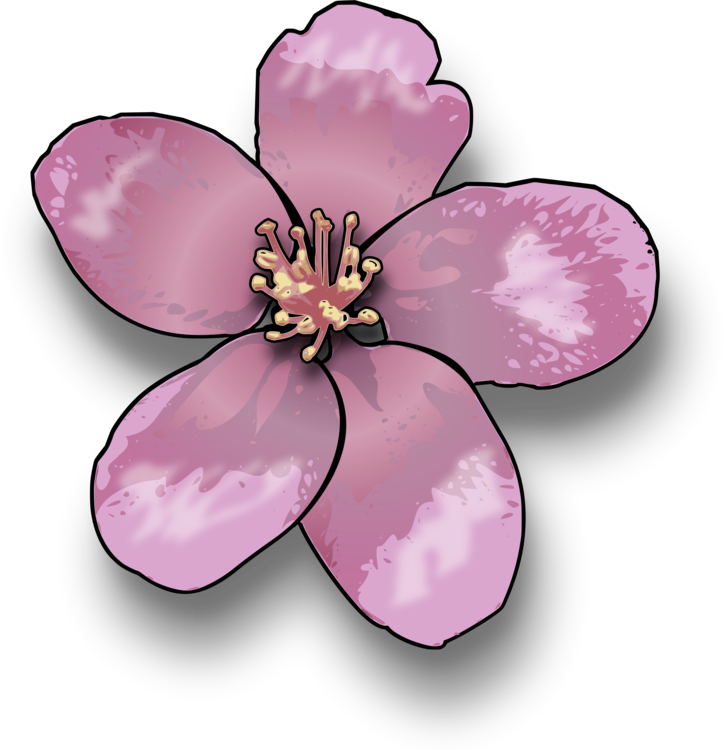 Pink,Flower,Blossom