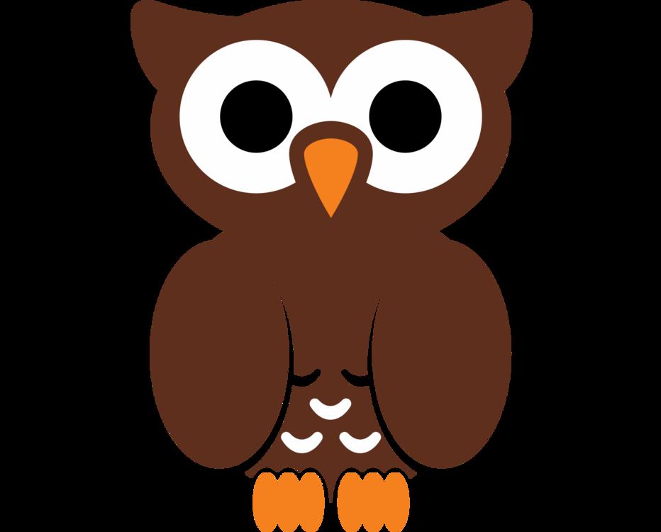Owl,Vertebrate,Bird