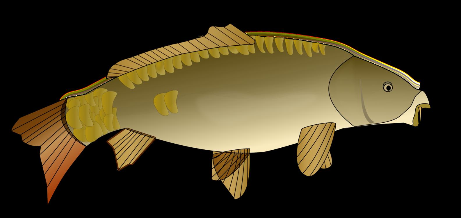 Perch,Bony Fish,Carp