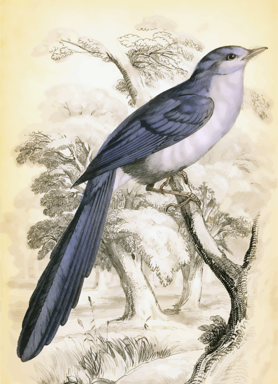 Hornbill,Crow Like Bird,Wildlife