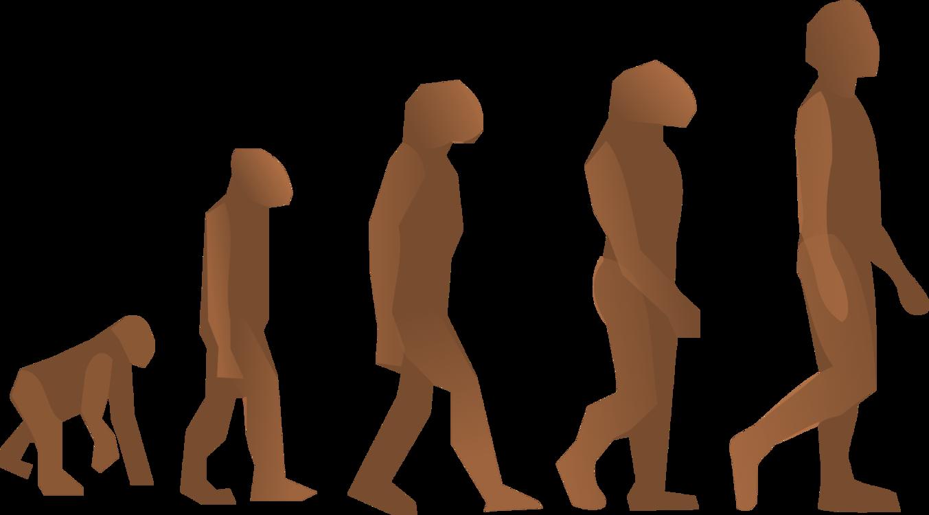 Standing,Human Behavior,Muscle