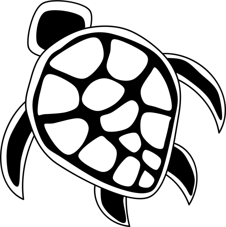 Green Sea Turtle Drawing The Turtle Free Commercial Clipart