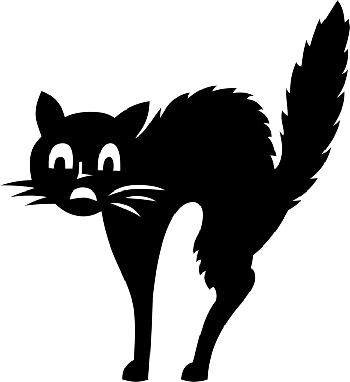 Domestic Short Haired Cat,Snout,Silhouette