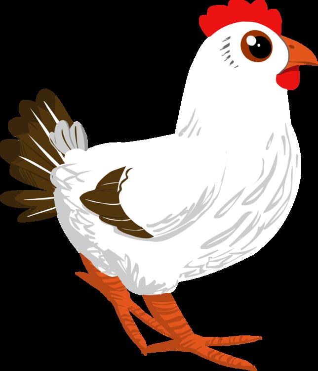 Art,Bird,Galliformes
