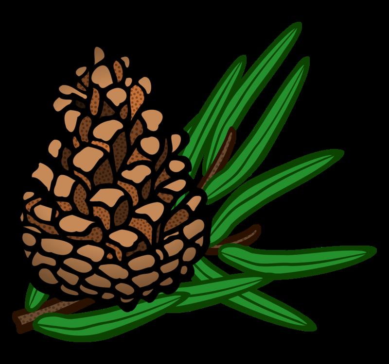 Pine Family,Plant,Flower