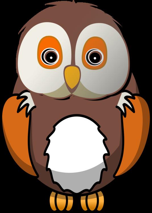 Owl,Beak,Bird Of Prey