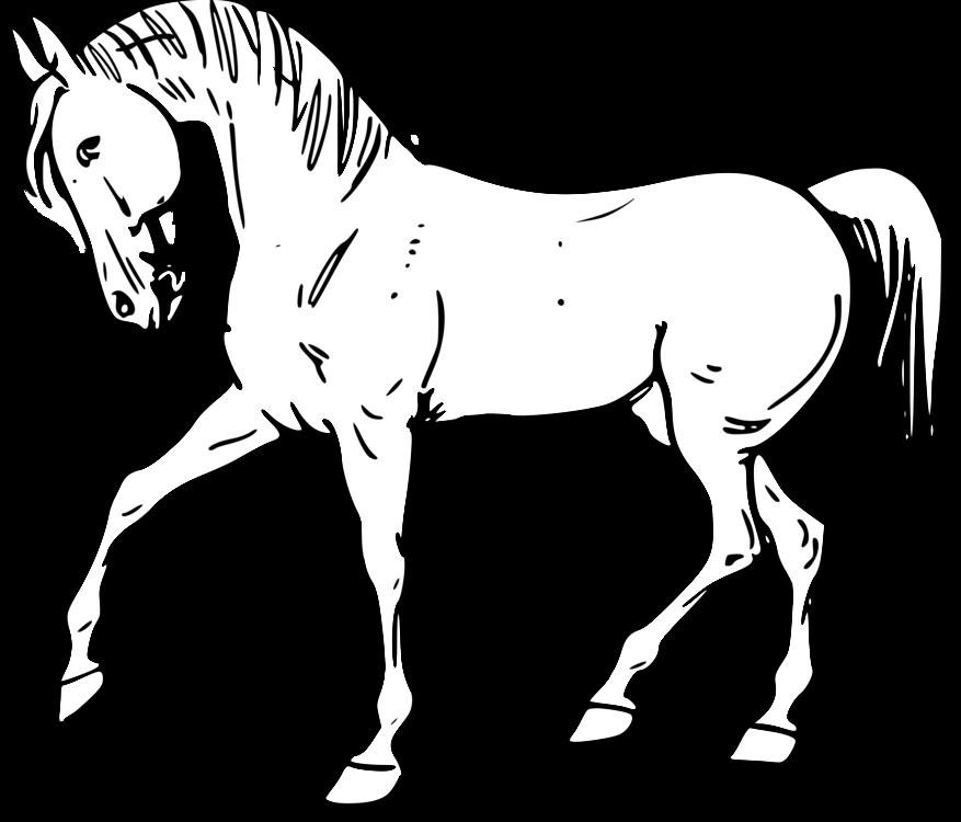 Pony,Horse Tack,Colt