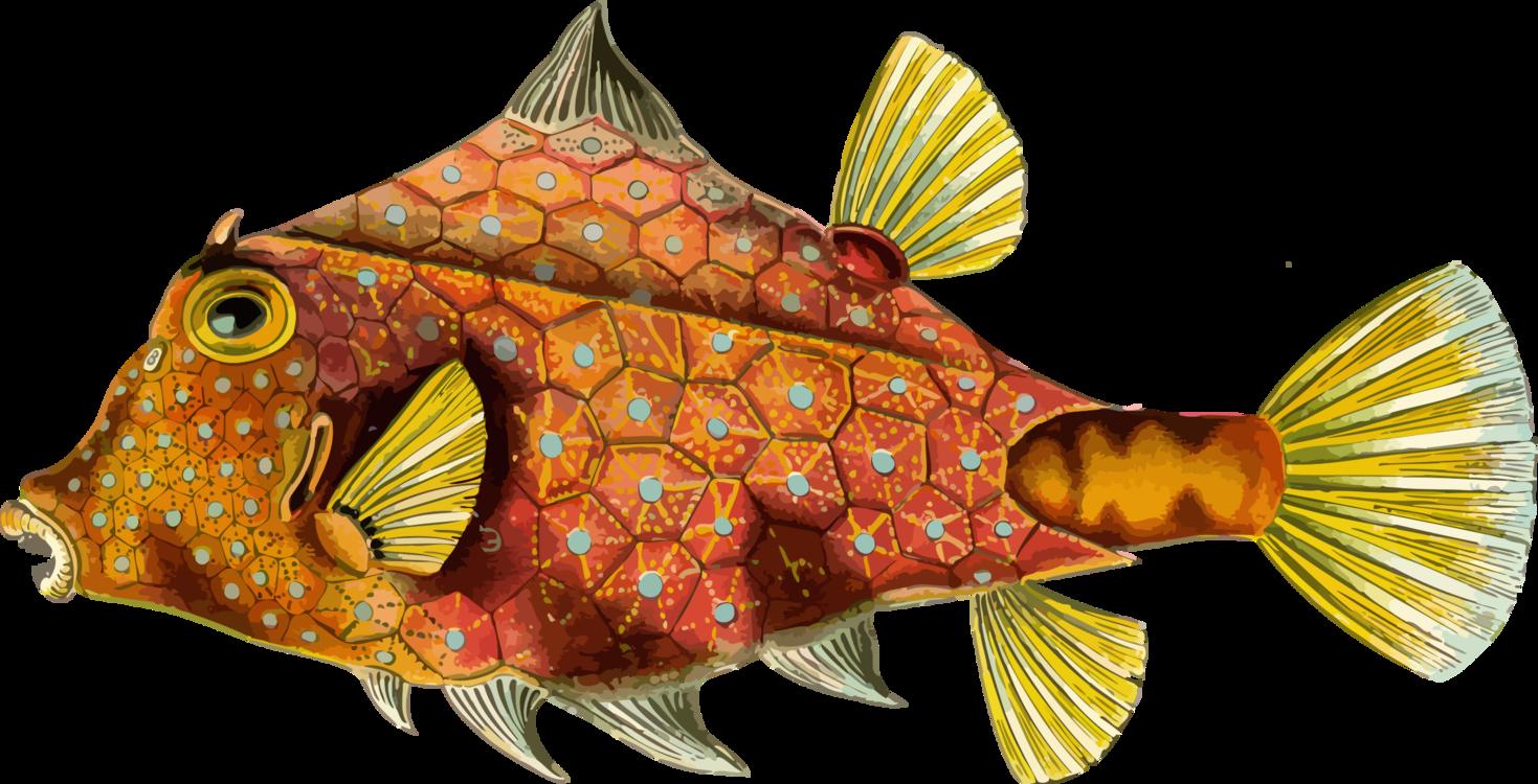 Orange,Marine Biology,Fish