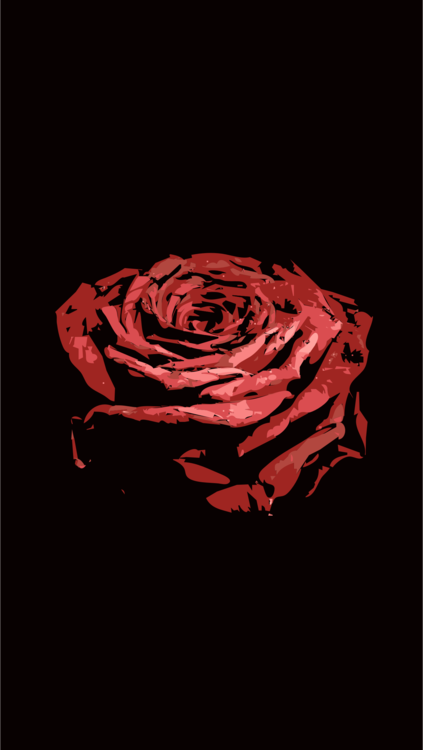 Computer Wallpaper,Flower,Darkness