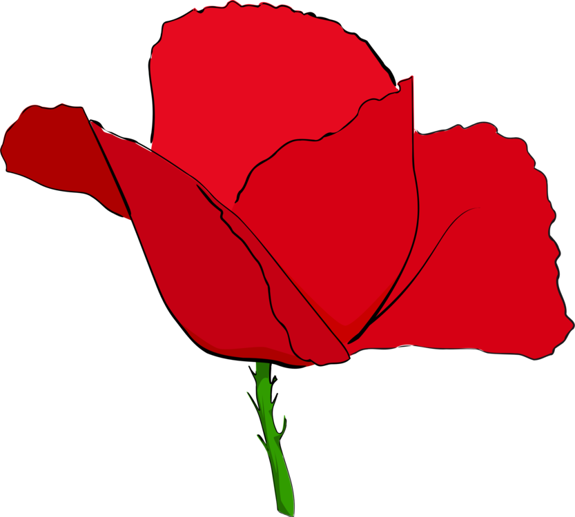 Common poppy remembrance poppy flower red free commercial clipart all photo png clipart common poppy remembrance poppy flower red mightylinksfo