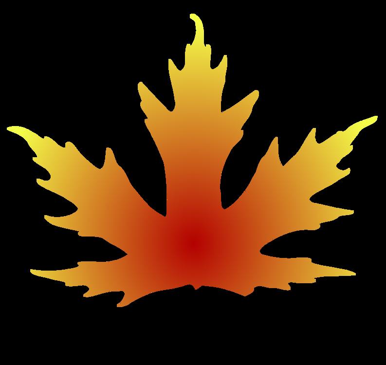 Plant,Leaf,Maple Leaf
