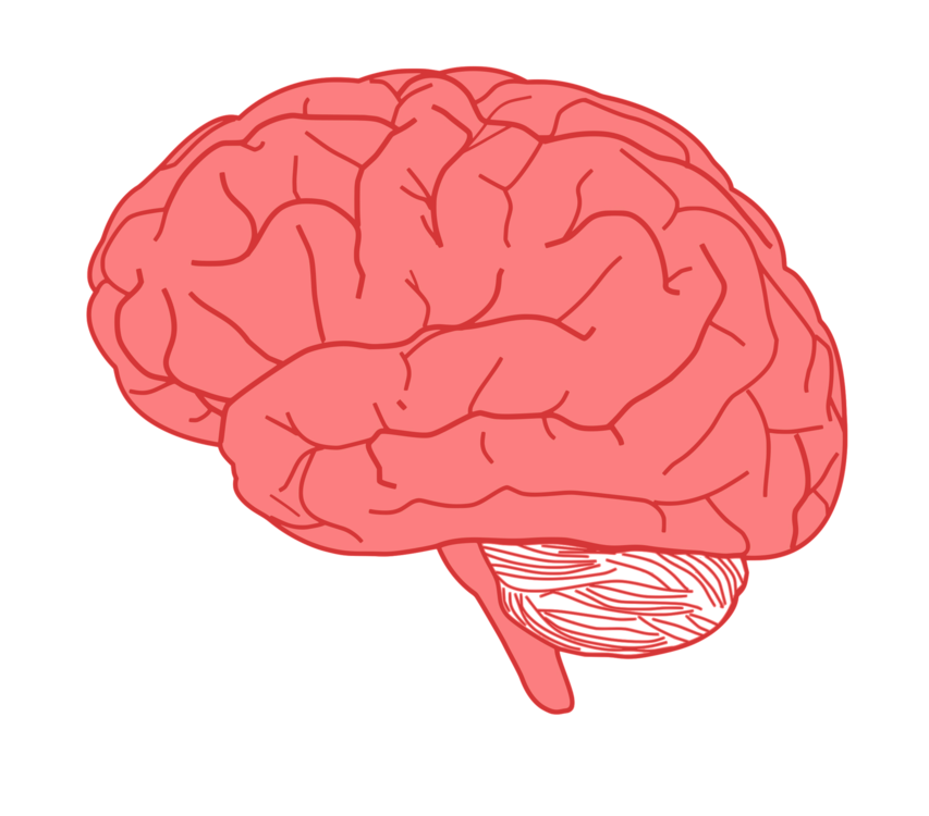 Human brain Download Synapse Presentation free commercial clipart ...