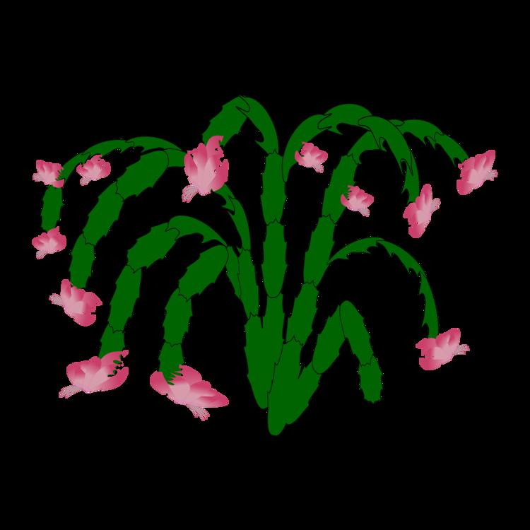 Plant,Leaf,Aquarium Decor