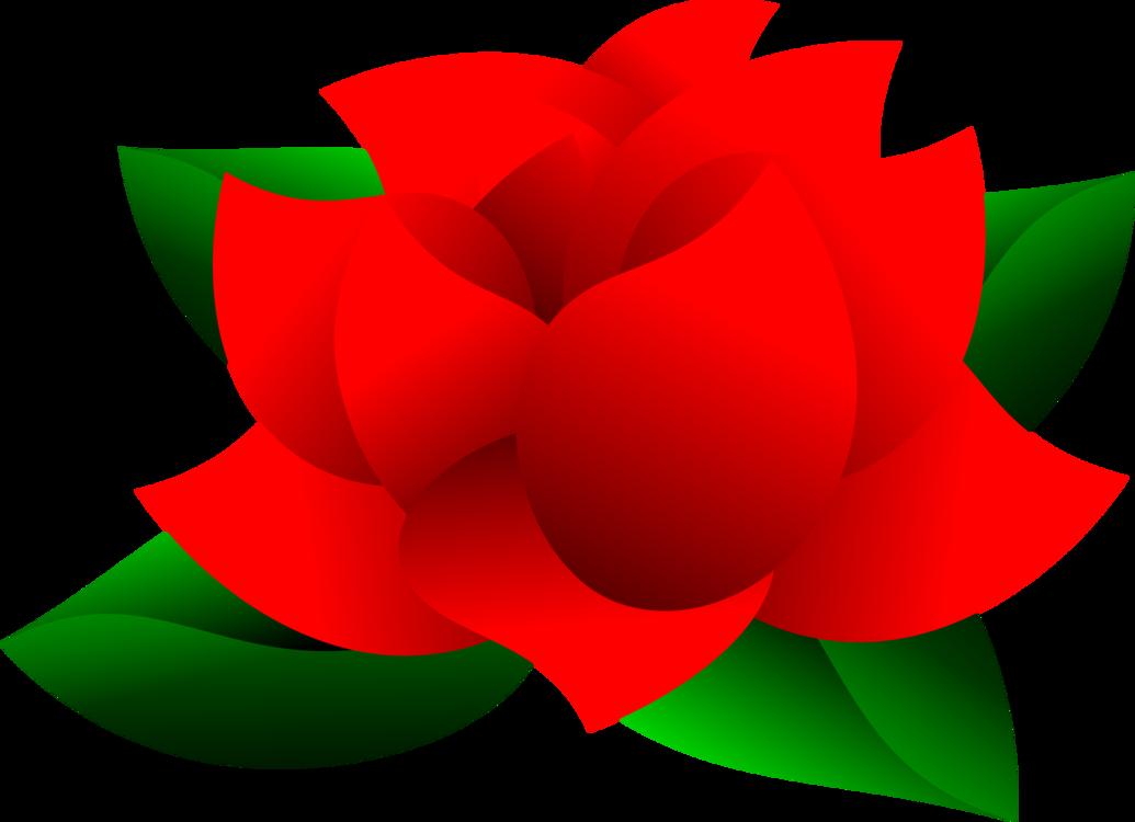 Plant,Flower,Rose Order