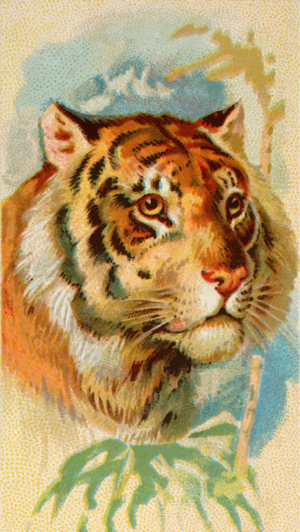 Snout,Wildlife,Big Cats