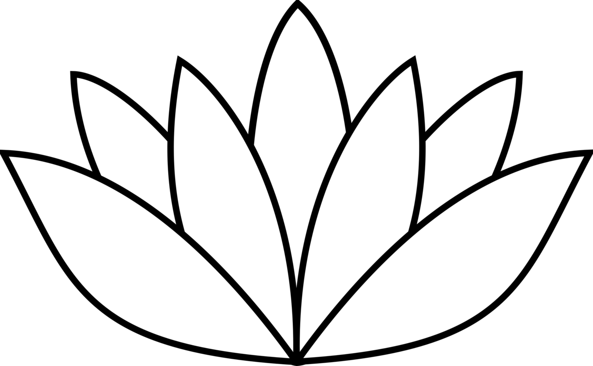 Nelumbo Nucifera Egyptian Lotus Nymphaea Lotus Water Lilies White