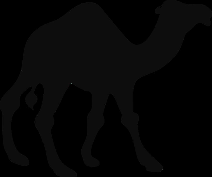 Wildlife,Silhouette,Livestock