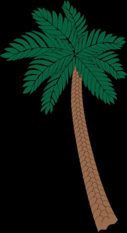 Plant,Leaf,Arecales